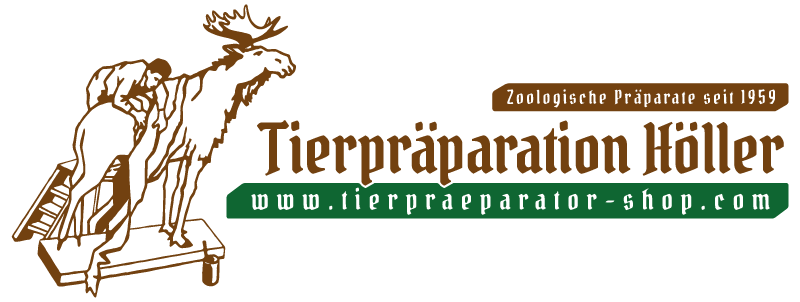 Tierpräparator Höller Oberösterreich • Tierpräparate Online-Shop
