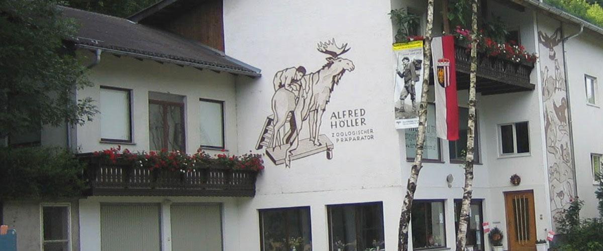 Tierpräparator Höller Oberösterreich • Tierpräparate kaufen (Online-Shop)