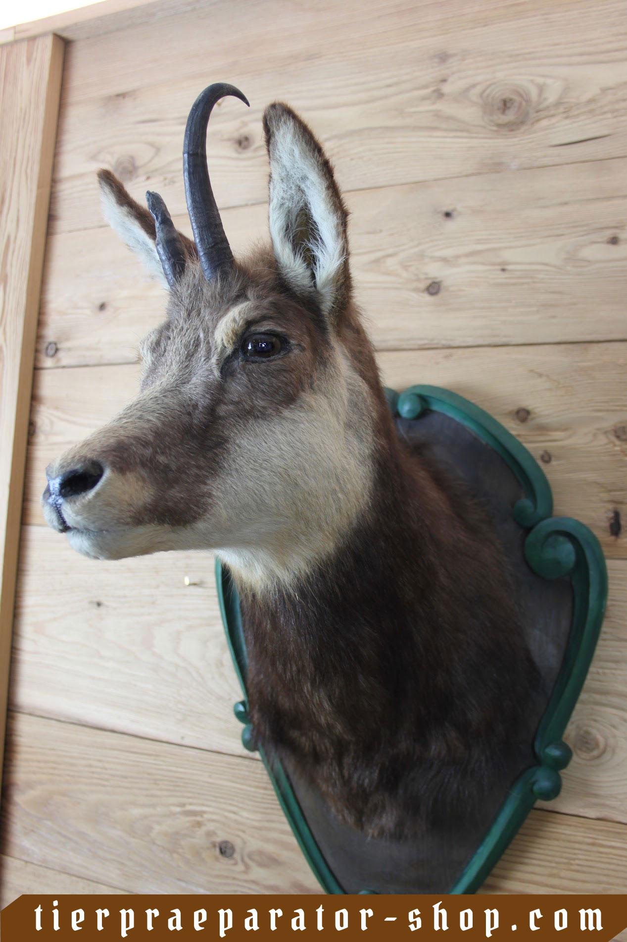 Tierpraeparator-Shop.com-Tierpraeparate-kaufen-173