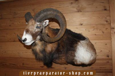 Tierpraeparator-Shop.com-Tierpraeparate-kaufen-378