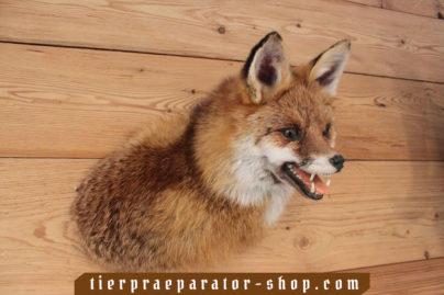 Tierpraeparator-Shop.com-Tierpraeparate-kaufen-381