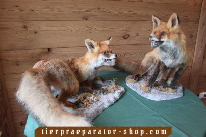 Tierpraeparator-Shop.com-Tierpraeparate-kaufen-484