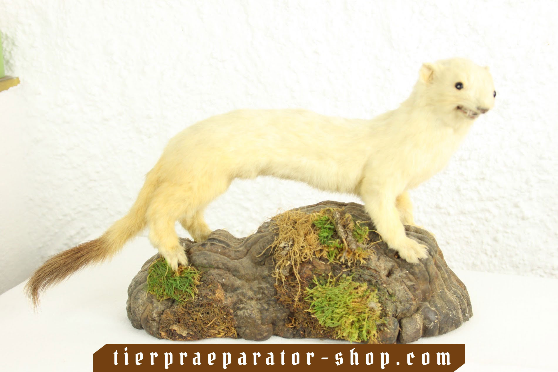 Tierpraeparator-Shop.com-Tierpraeparate-kaufen-533
