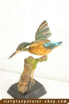 Besondere Vögel