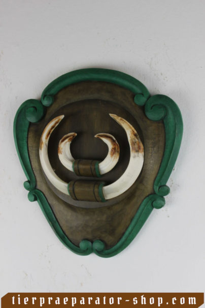 Tierpraeparator-Shop.com-Tierpraeparate-kaufen-1453