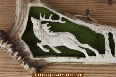 Tierpraeparator-Shop.com-Tierpraeparate-kaufen-1946