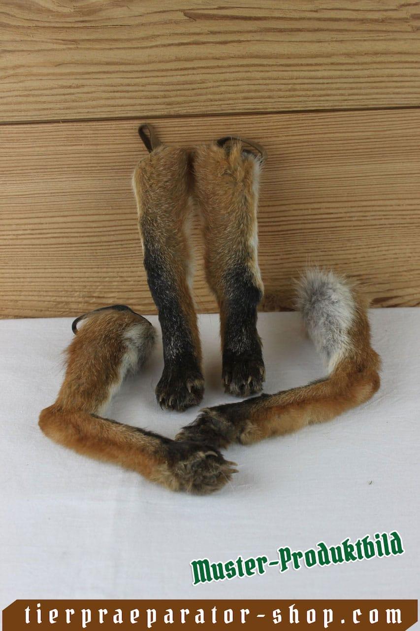 Tierpraeparator-Shop.com-Tierpraeparate-kaufen-2205