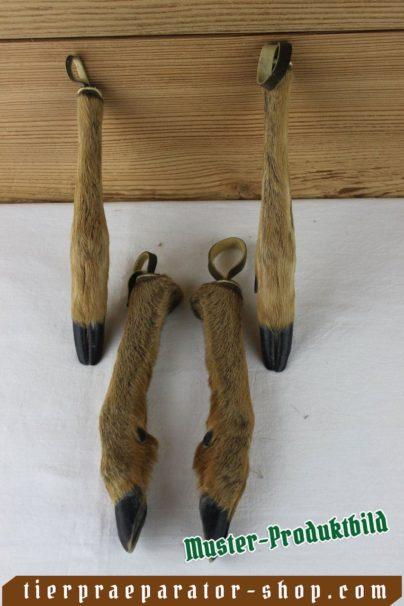 Tierpraeparator-Shop.com-Tierpraeparate-kaufen-2215