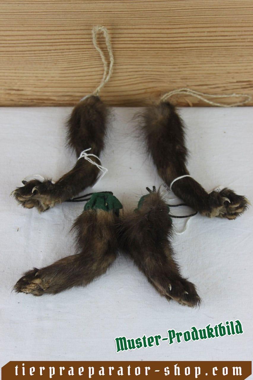 Tierpraeparator-Shop.com-Tierpraeparate-kaufen-2228