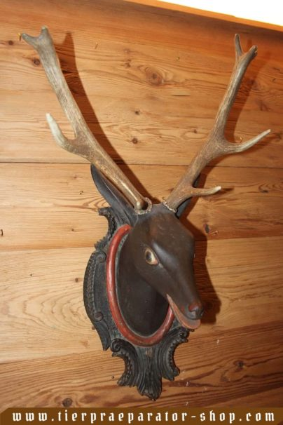 Tierpraeparator-Shop.com-Tierpraeparate-kaufen-1590