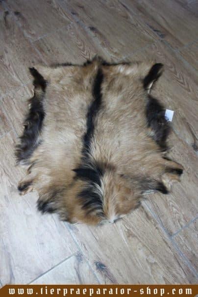 Tierpraeparator-Shop.com-Tierpraeparate-kaufen-1596