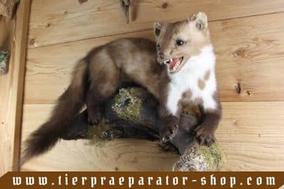 Tierpraeparator-Shop.com-Tierpraeparate-kaufen-1706